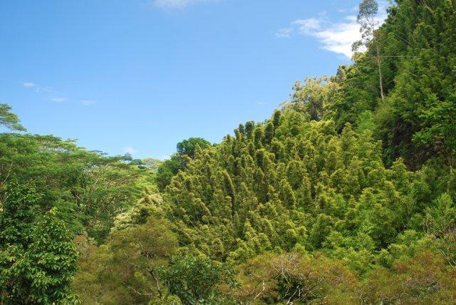 Мауи дорога