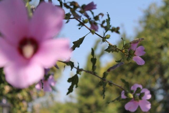 ...На даче у тёти донны Розы