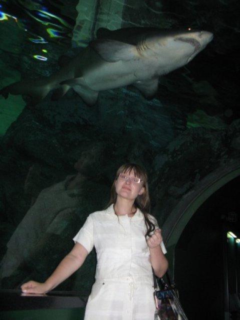 Стеклянный коридор с акулами в океанариуме, Сеул, Южная Корея