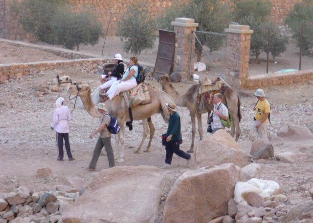 Некоторые туристы спустились с горы Моисея длинным путем на верблюдах