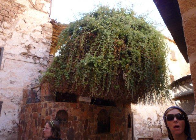 Неопалимая Купина - главная достопримечательность монастыря