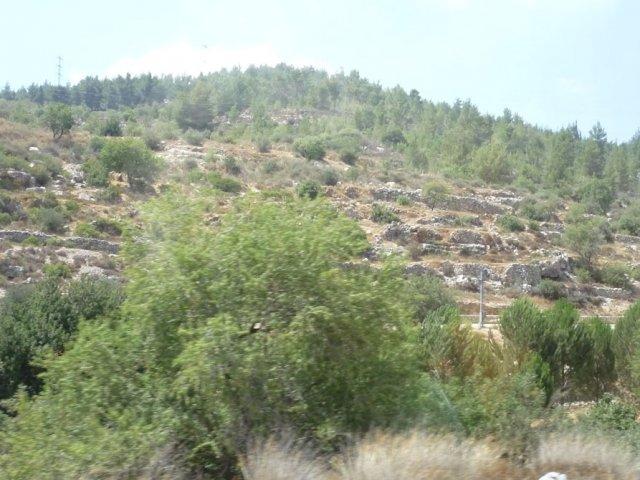 Иерусалимский лес. На подъезде к Иерусалиму
