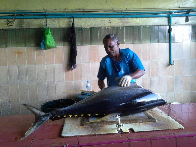 местное население в основном употребляет тунца