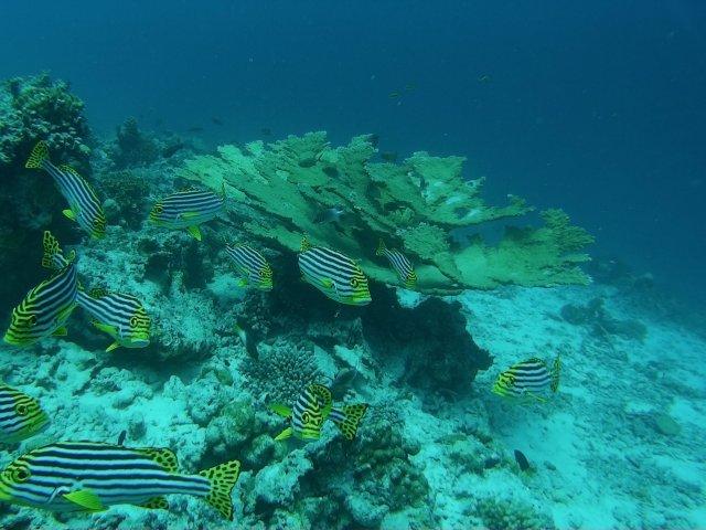 снорклинг на рифах завораживает