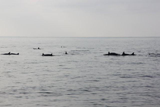 дельфины очень быстрые, так и не успели хорошо сфотографировать их
