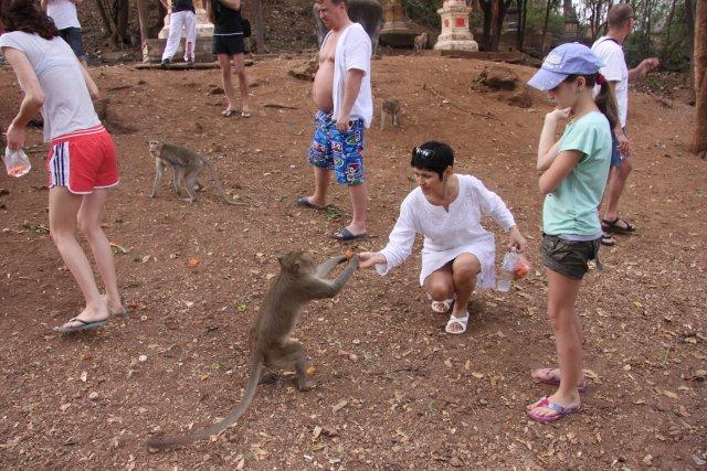 на острове обезьян кормили этих потешных зверушек