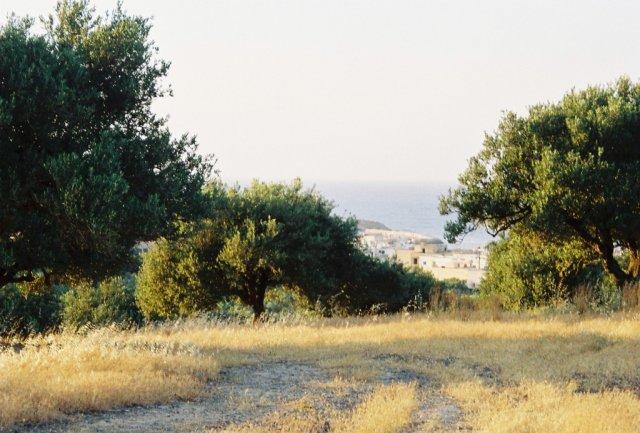 В оливковом саду
