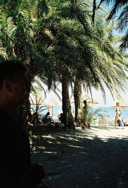 роща пальм