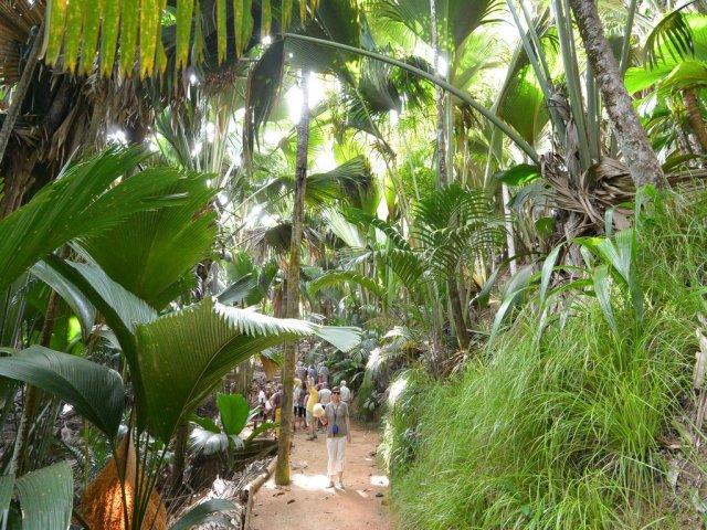 Ботанический парк на острове Праслен.