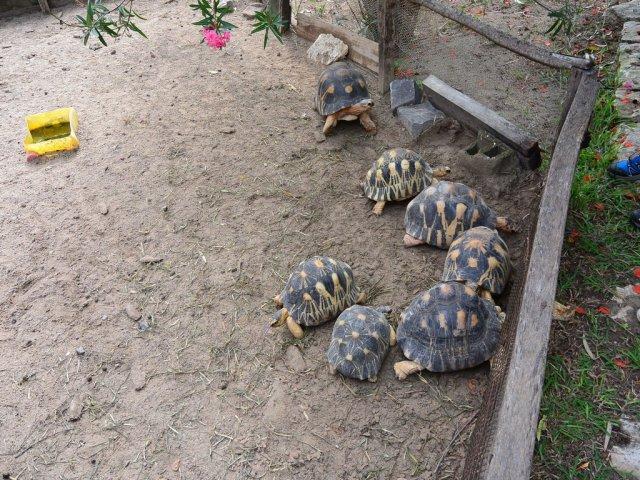 Черепахи с цветными панцирями.