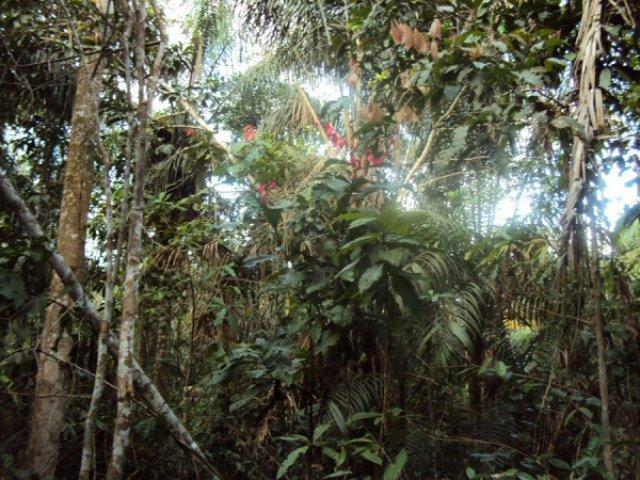 Галерейный лес, Венесуэла