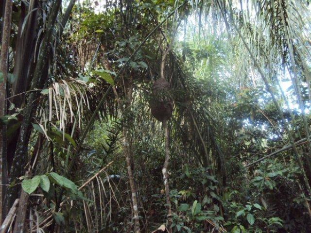 Термитник в сельве, Венесуэла