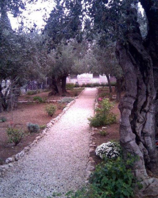 Гефсиманский сад, Иерусалим, Израиль