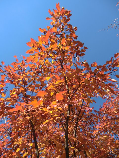 Осень на бульваре.
