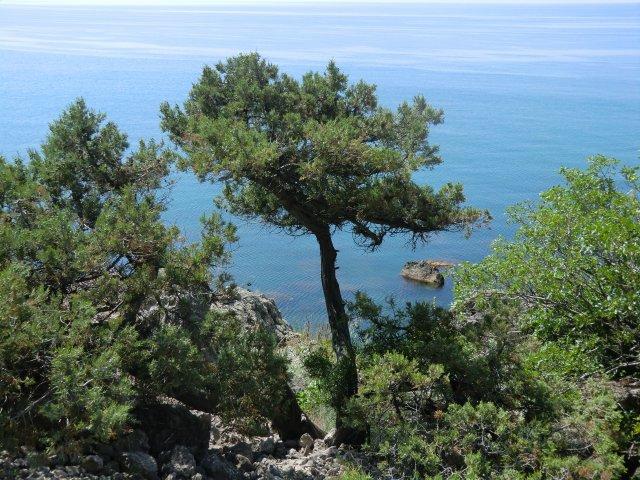 Берега Чёрного моря.