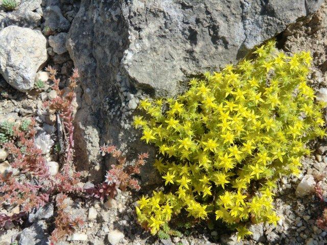 Цветы на скалах.