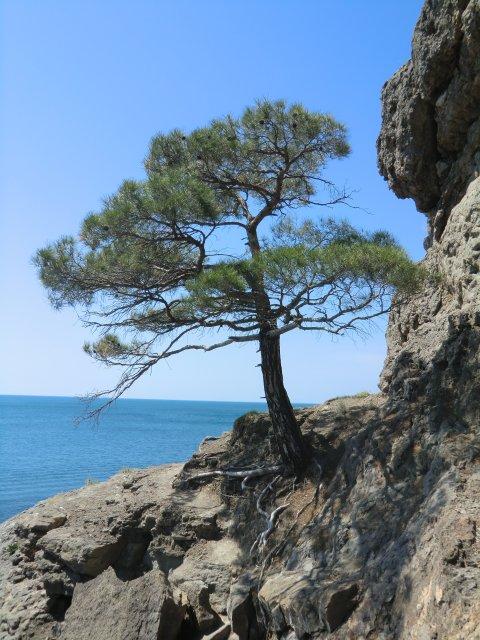 На скалах Голубой бухты.