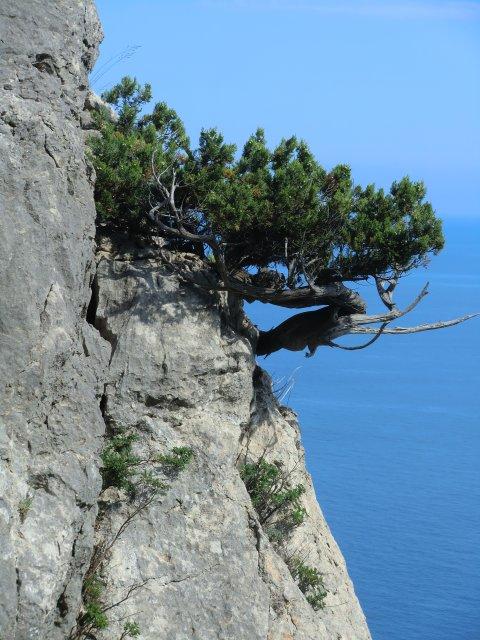 Жизнь на скалах.