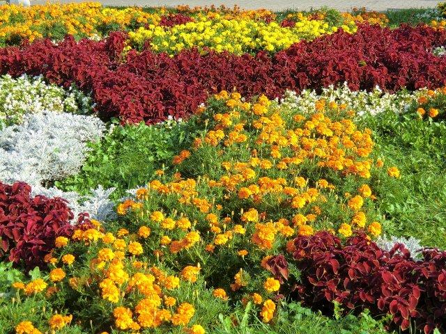 Цветники Воронцовского парка.