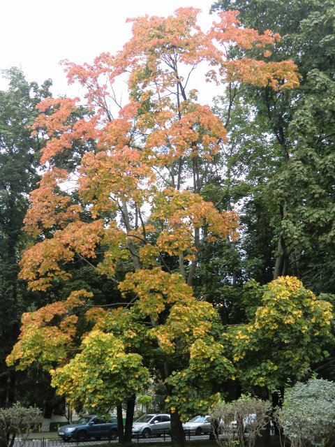 Осень на ул. Гарибальди.