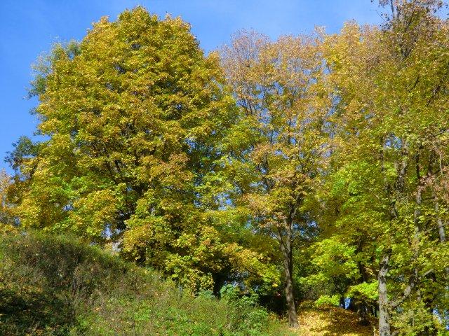 Осень в Коломенском.
