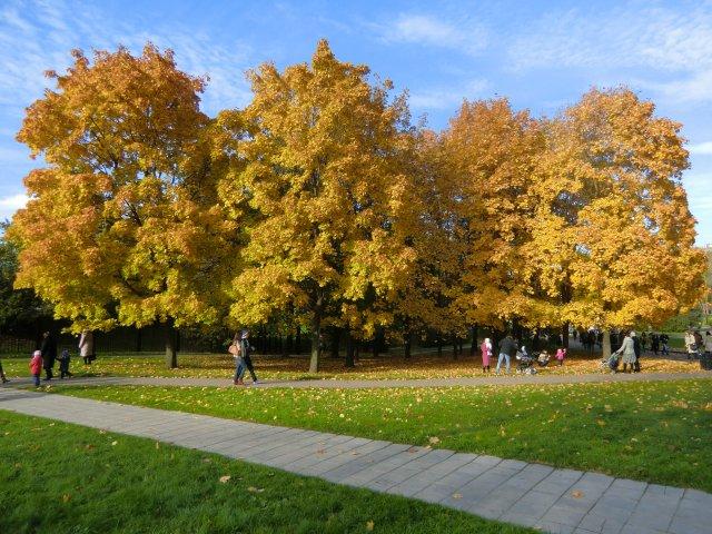 6 октября 2013.  Осень в Коломенском.