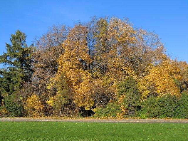 Осенние парки около Московского университета.