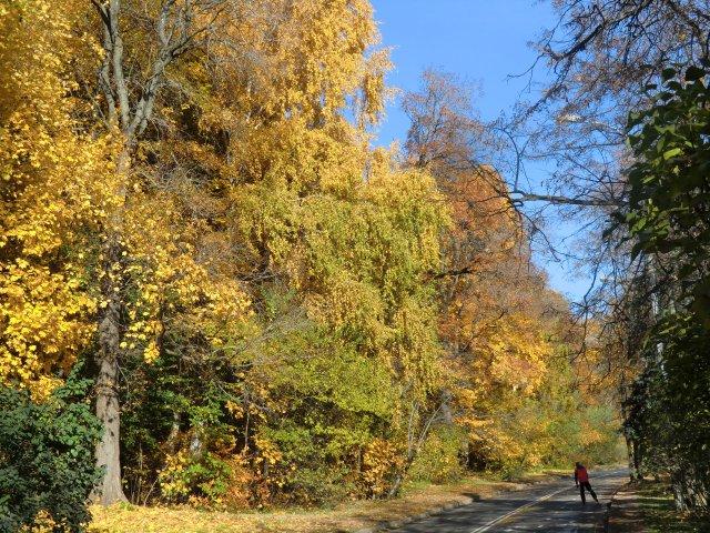Осень на Воробьёвых горах.