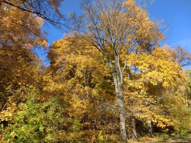 Воробьёвы горы осенью.