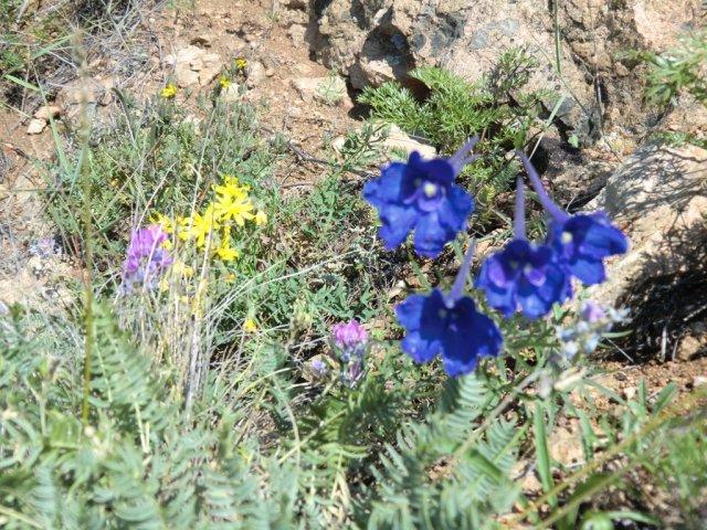 Цветы в скалистых берегах Байкала.