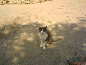 Гурзуфские кошки, Крым