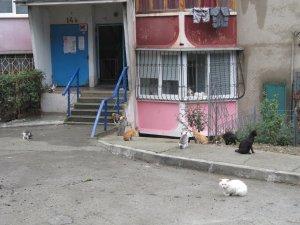 Вот и котики на одной из улиц