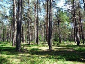 Лес в городе