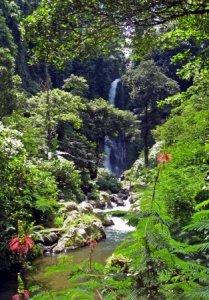 Девственная природа острова Бали