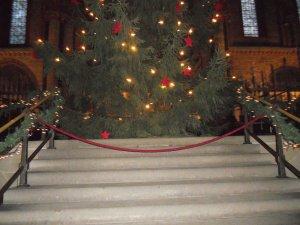 Большая рождественская ель в Кафедральном соборе Бремена