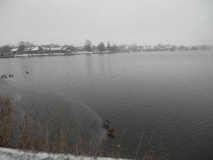 Утки на озере Гальве
