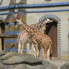 Зоологический сад Берлина