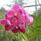 Барбадос (Бриджтаун) Оранжерея орхидей