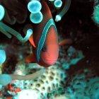 Подводный мир, остров Тенгол, Малайзия