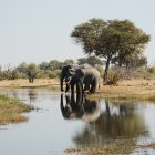 Река Окаванго, Ботсвана