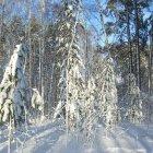 Лесистая местность Саратова зимой, Россия