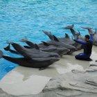 Дельфинарий в Риччионе, Италия