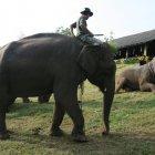 Сафари, Таиланд