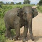 Национальный парк Удауалау, Индия