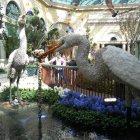 Ботанический сад и консерватория Белладжио, Лес-Вегас