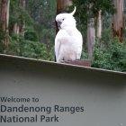 Национальный парк Данденонг Рейнджес, Мельбурн