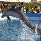 Дельфинарий, Римини