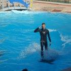 Дельфинарий Dolphinella