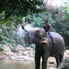 Лагерь слонов Бан Иван Чанг, остров Чанг