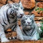 Зоопарк имени Луи Ариэля Гольдшмидта, Хайфа